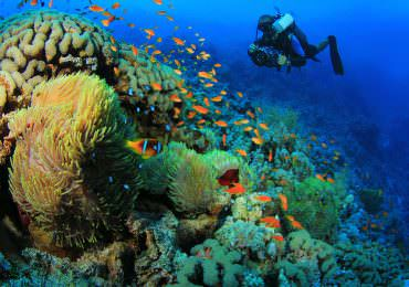 Top 15 Destinations for Diving That Will Leave You Speechless