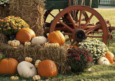 Top 15 Fall Travel Destinations Hosting Festivals